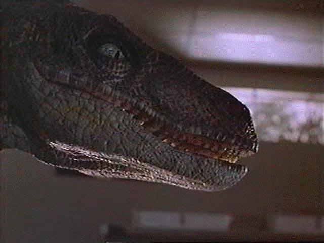 I am a Velociraptor